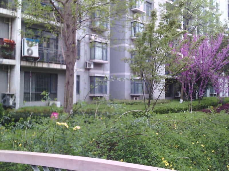 常青花园十号小区房源出租信息