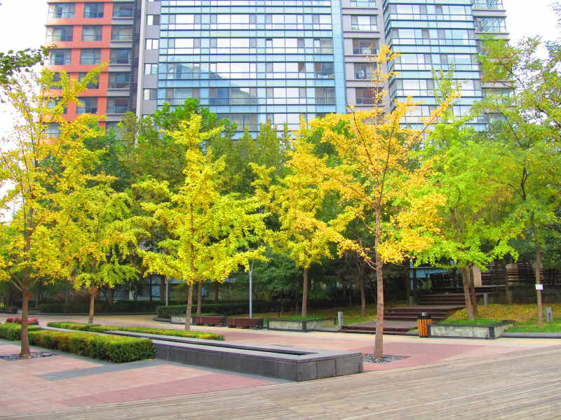 CBD金地国际花园租房房源出租信息